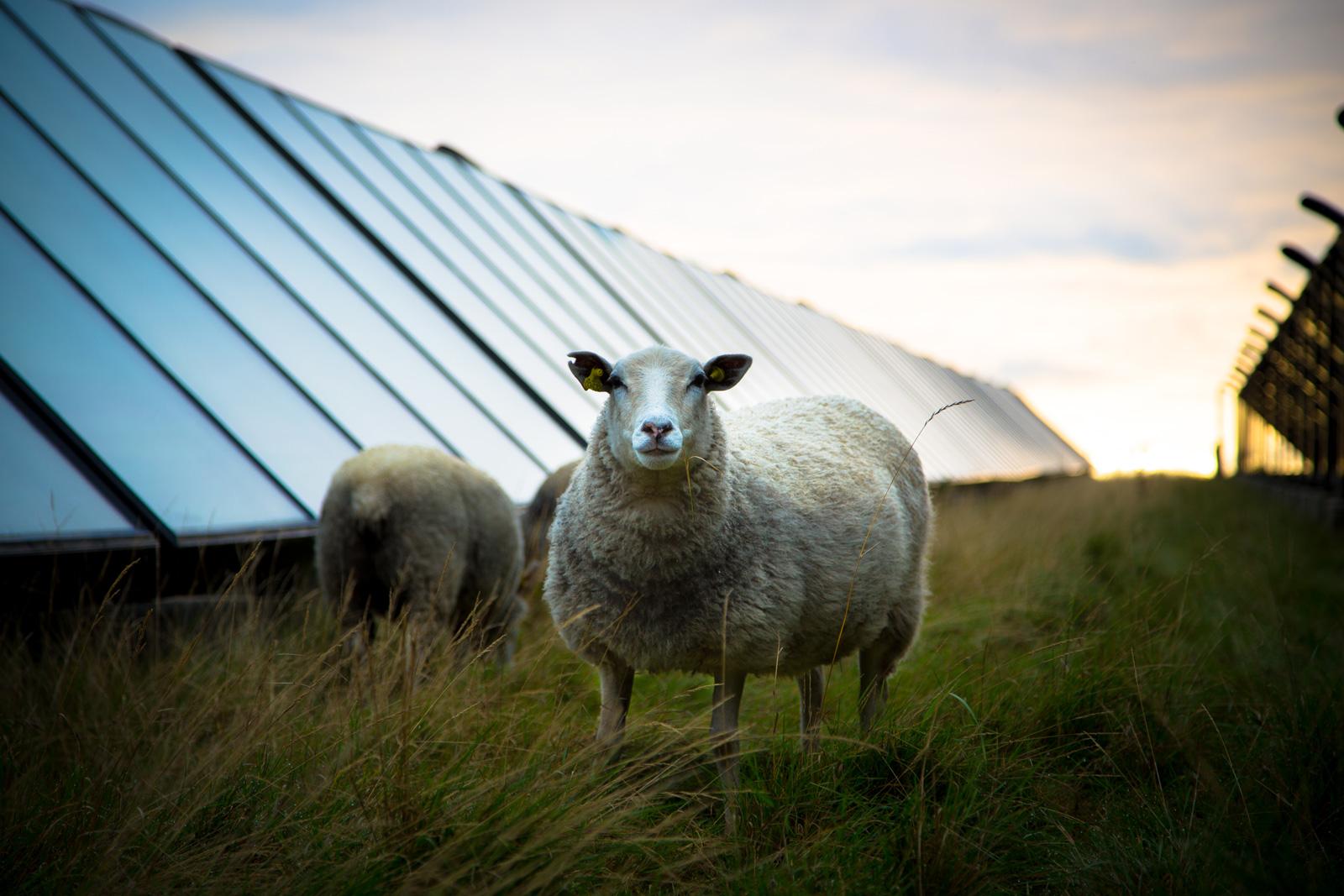 Solparkens solceller står op