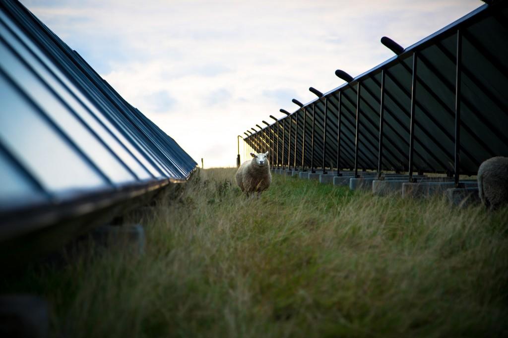 Solparkens Solceller - Sønderborg Fjernvarme